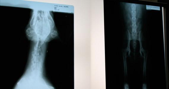 Clínica Veterinaria Villava Radiología