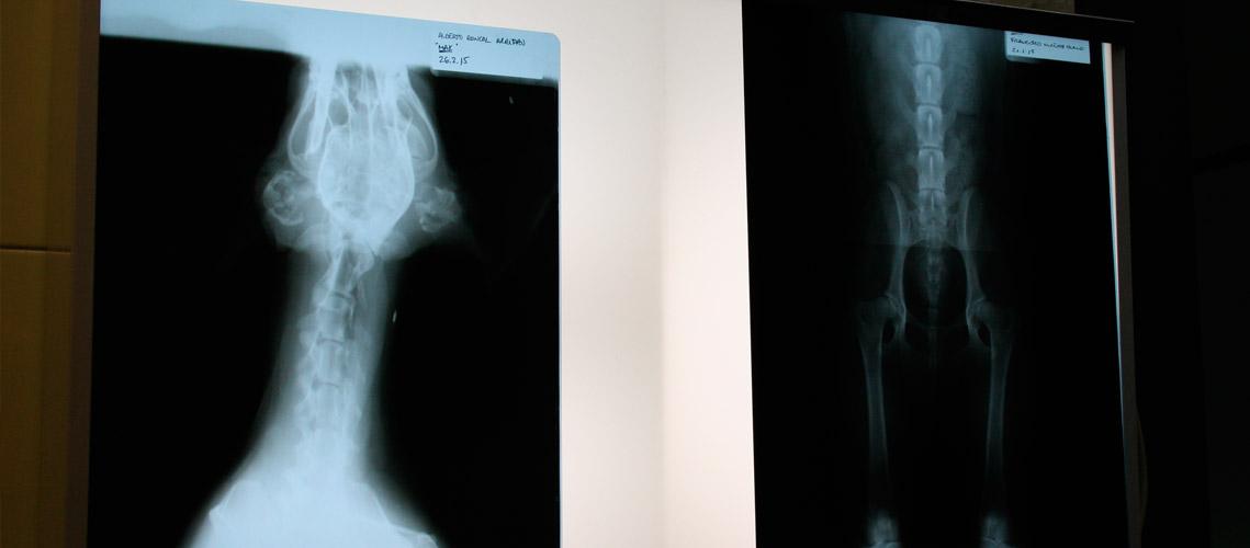 radiografías de mascotas en Veterinaria Villava