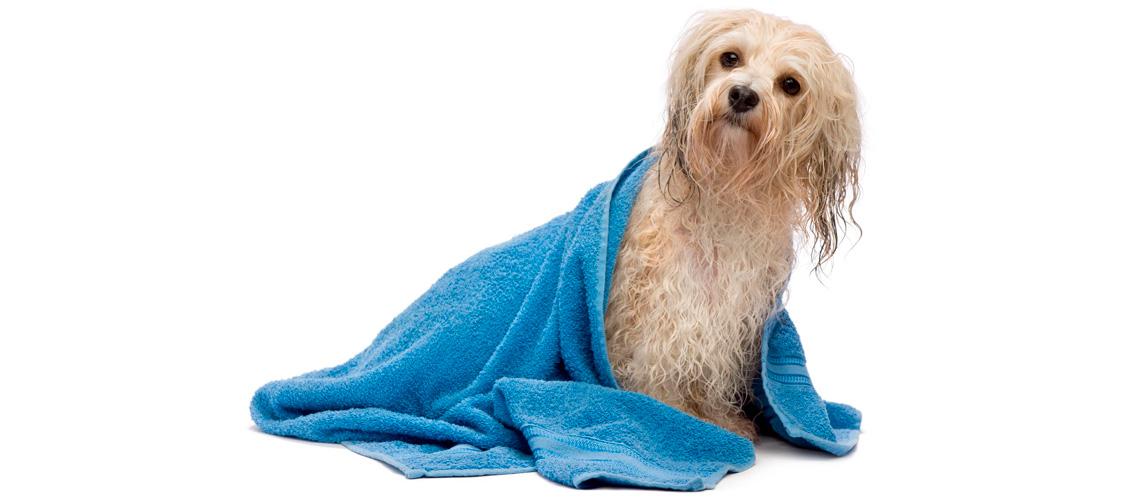 perro envuelto en una toalla tras un baño de peluquería canina