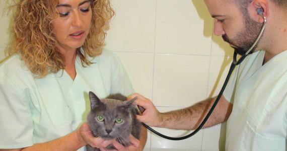 Clínica Veterinaria Villava Consulta Veterinaria