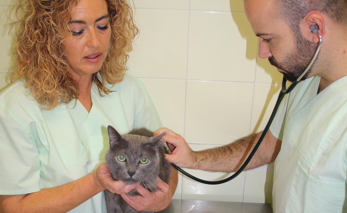 Ana y Javier examinando un gato en la consulta de Veterinaria Villava
