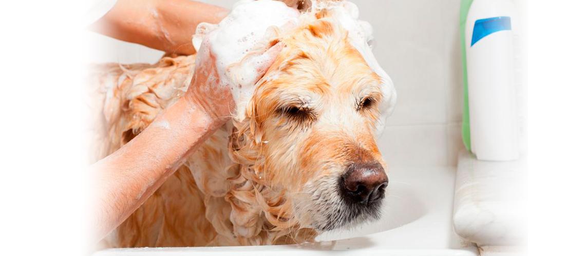 perro recibiendo un baño sanitario en peluquería canina