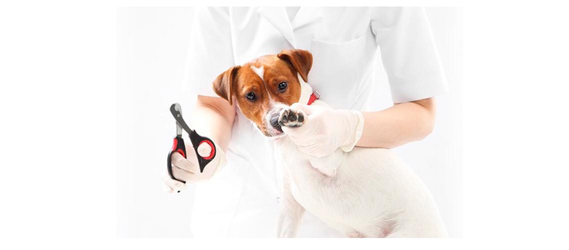 peluquera canina cortando las uñas a un perro