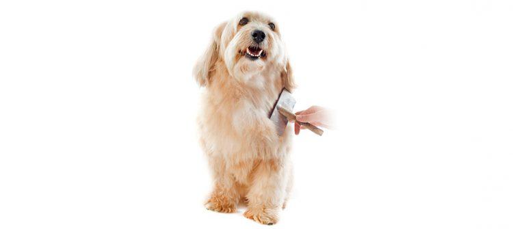 perro peinado en peluquería canina