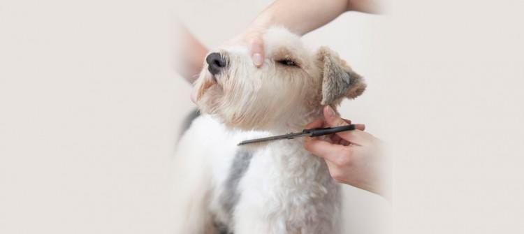 perro en peluquería canina, cortando el pelo
