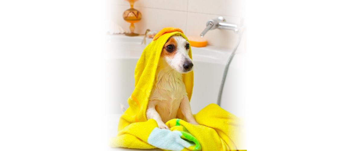 perro recibiendo un baño de ozonoterapia en peluquería canina