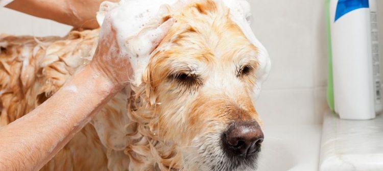 baño sanitario de un perro en peluquería canina