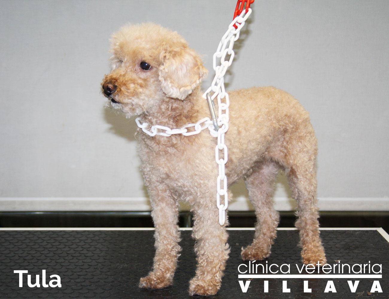 Peluquería Canina Pamplona