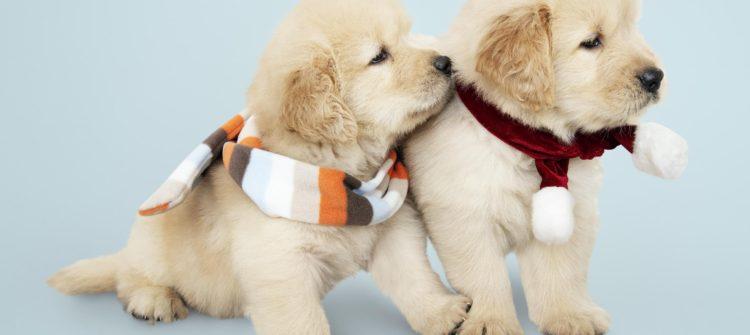 Cuidados de tus mascotas en invierno